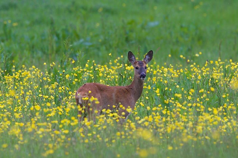 Heath Farm 2015-05-30 at 19-35-08