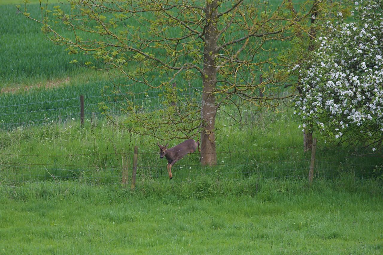 Heath Farm 2015-05-15 at 16-45-07