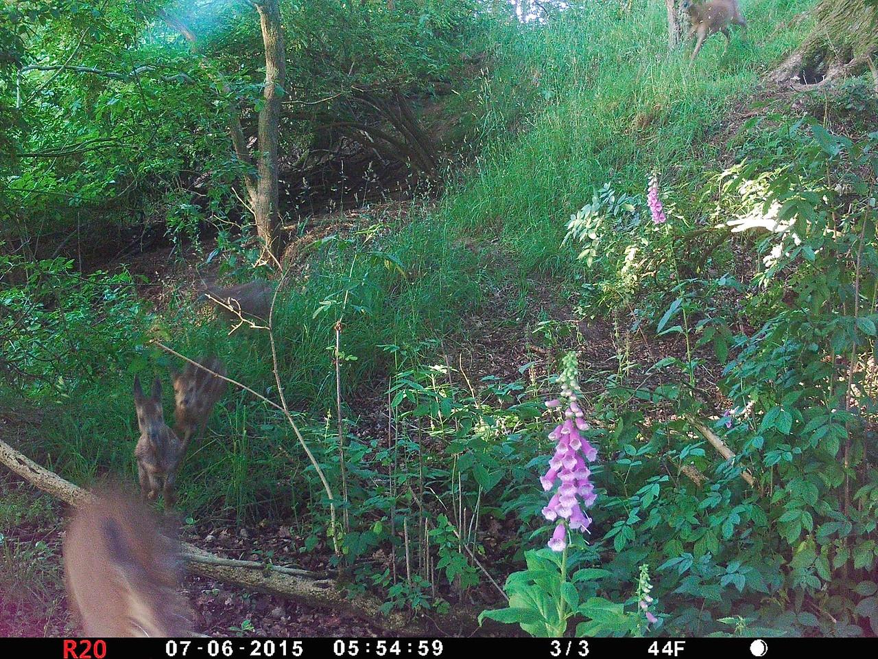 Heath Farm 2015-07-06 at 05-55-04