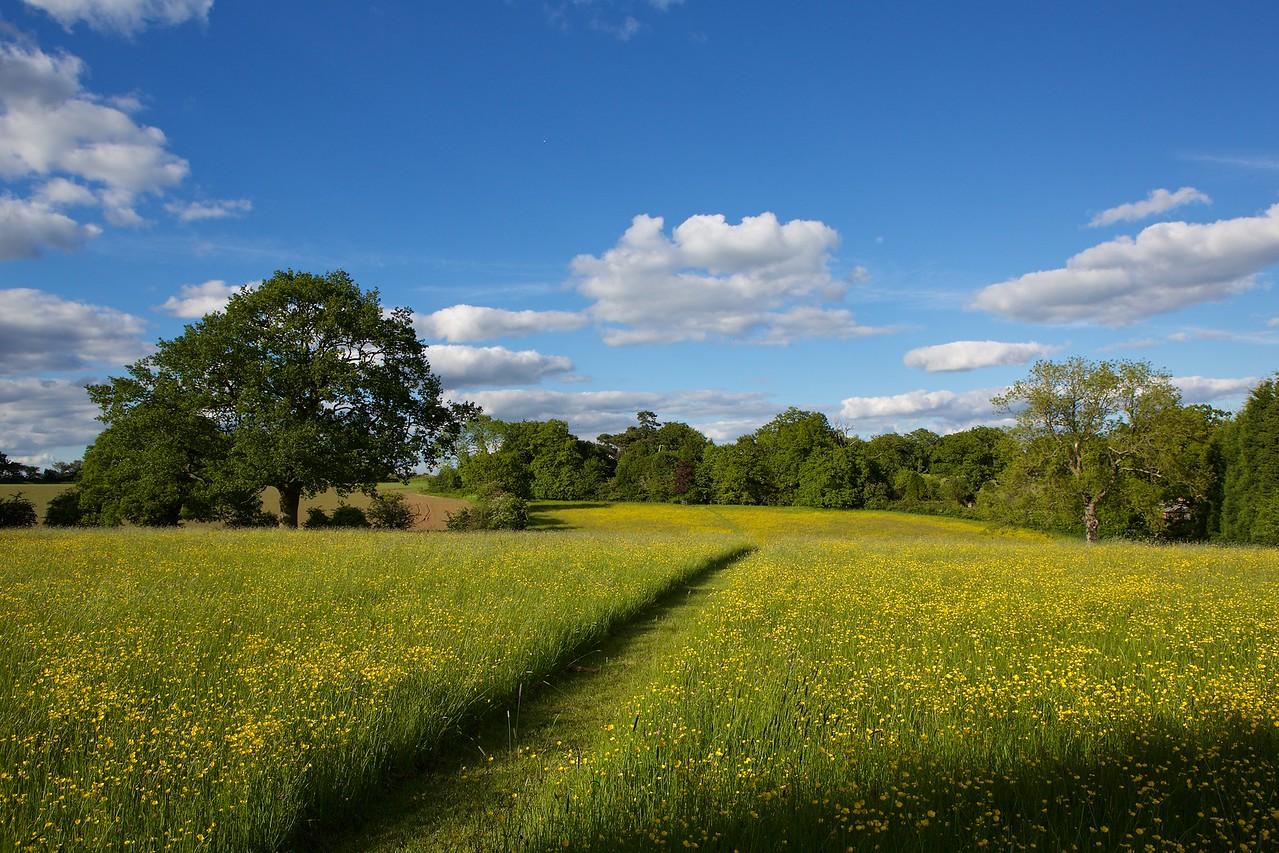 Heath Farm 2015-06-03 at 17-24-40
