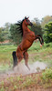 Heathcott Arabians : 41 galleries with 1024 photos
