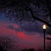SRf2003_2081_SunsetTrees