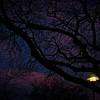 SRf2003_2084_SunsetTrees