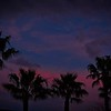 SRf2003_2082_SunsetTrees