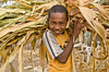 Odin (age 12) shows me the dried stalks of the family's maize crop, which is used as feed for the family's other livestock.