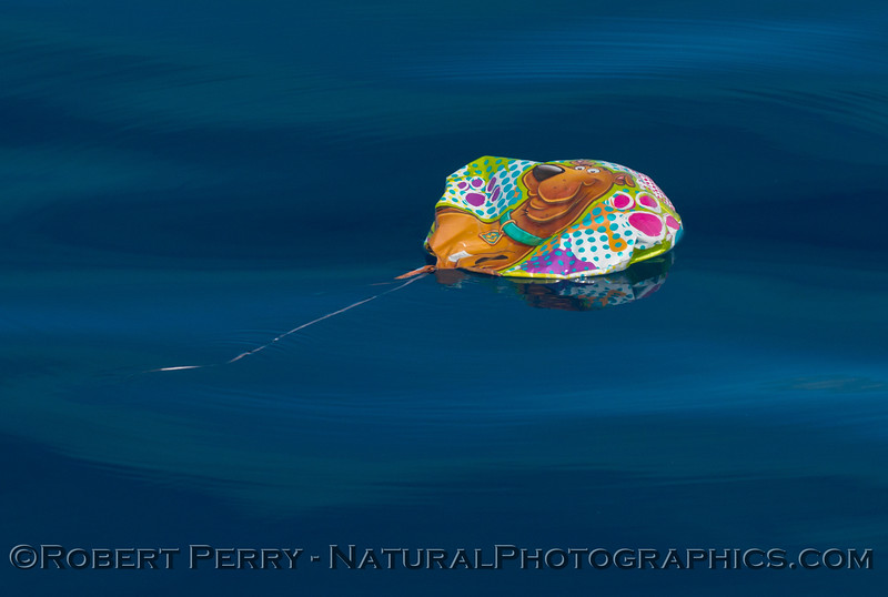 Orange Scooby Doo balloon debris on surface 2014 10-15 SB Channel-006