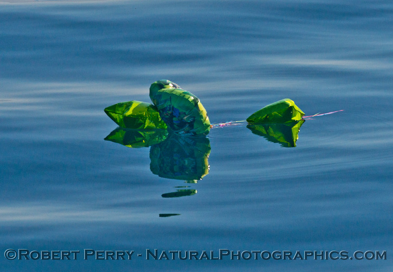 balloon trash on the surface 2014 09-23 SB Channel-018