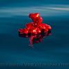 mylar balloons-2-2013 02-16 SB Channel -025