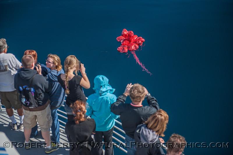 mylar balloon debris retrieval 2013 02-16 SB Channel-c-007