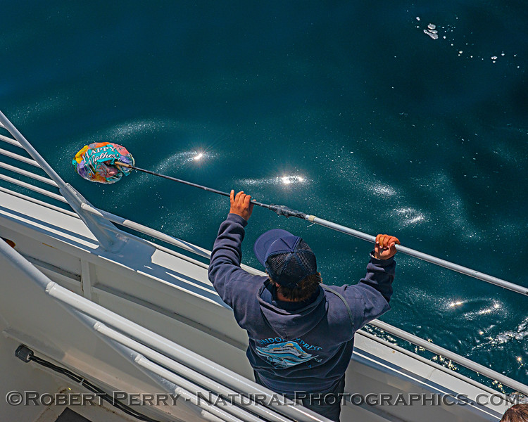 mylar balloon retrieval trash plastic 2018 05-12 SB Coast-b-003