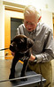 DAVID LACHANCE — BENNINGTON BANNER<br /> Veterinarian George Glanzberg examines a chocolate laborador puppy, which he said was too young to be vaccinated.