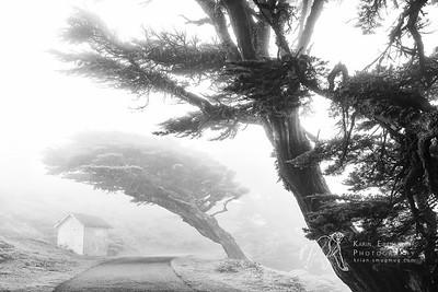 Foggy Point Reyes