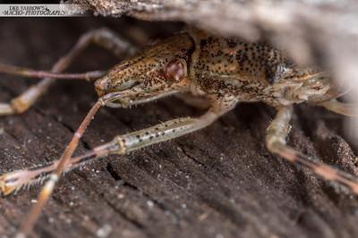 Brown Bug Hiding