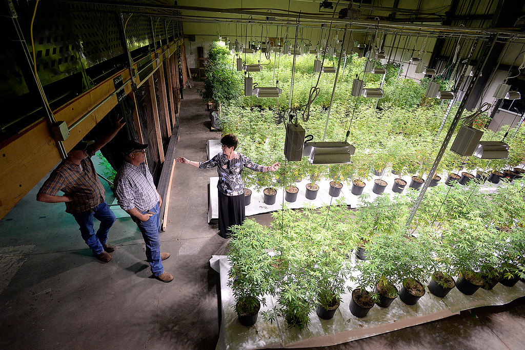 . Tom Hewson, center, talks with Loveland Mayor Jackie Marsh about his hemp growing operation Wednesday, April 11, 2018, at his warehouse in Loveland.   (Photo by Jenny Sparks/Loveland Reporter-Herald)