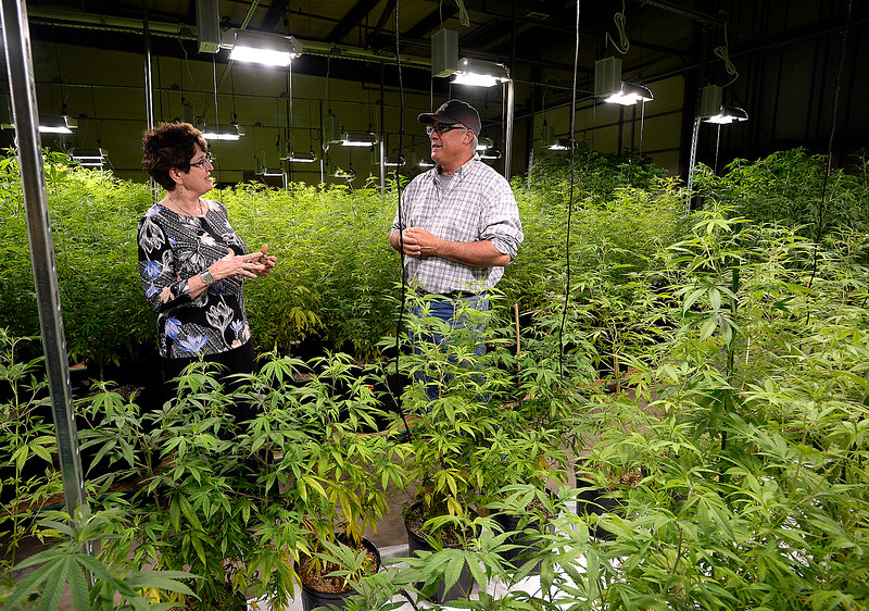 Tom Hewson, left, talks with Loveland Mayor Jackie Marsh about his hemp growing operation Wednesday, April 11, 2018, at his warehouse.   (Photo by Jenny Sparks/Loveland Reporter-Herald)