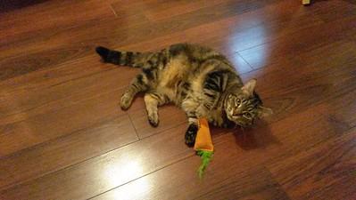 Henrietta & her Carrot