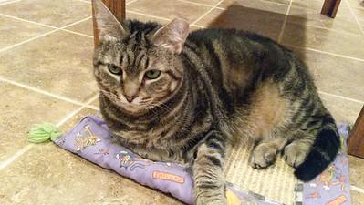 Henrietta Resting on Her Mat