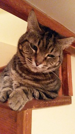 Henrietta on the Stairs 6-2016