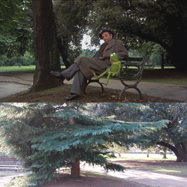 "Peter Falk joins Kermit and tries to guess his backstory.<br/><br/>One of the call sheets from the filming at Battersea Park lists ""Park Bench"" as one of the required props, so it makes sense that the bench is no longer there. I was surprised that the tree had been replaced though."