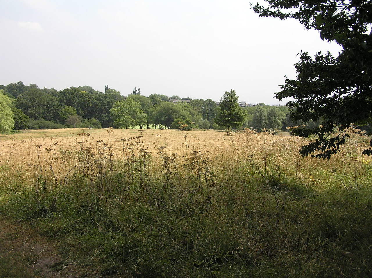 "A place that Jim Henson frequented, Hampstead Heath is a public open space very close to his Hampstead home. The Heath covers 791 acres, which includes ""25 main ponds and areas of ancient woodland, bog, hedgerows and grassland."""