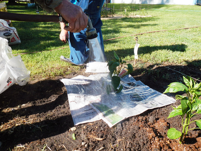 Laying down newspapers to choke out weeds and conserve water.