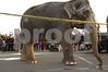 2008-03-11 ElephantWalk 067