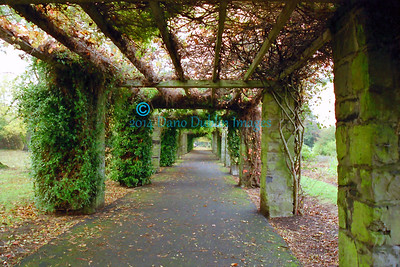 Pergola in Autumn - Image1