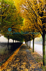 Autumn in Dublin