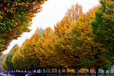 Autumn in Dublin - 3