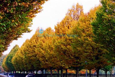 Autumn in Dublin - 3