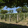Savina Winery - Vineyard