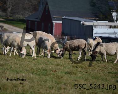 Herding 11/04/17