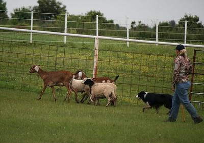 Herding Clinic 2015