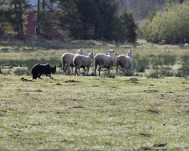 Herding Clinics
