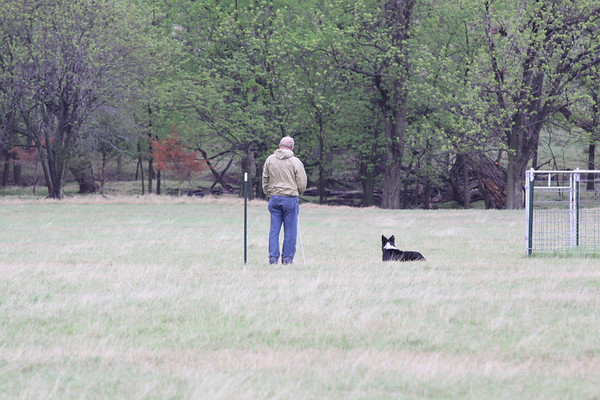 4CHAT AKC Herding Trials and Tests 05-03-09