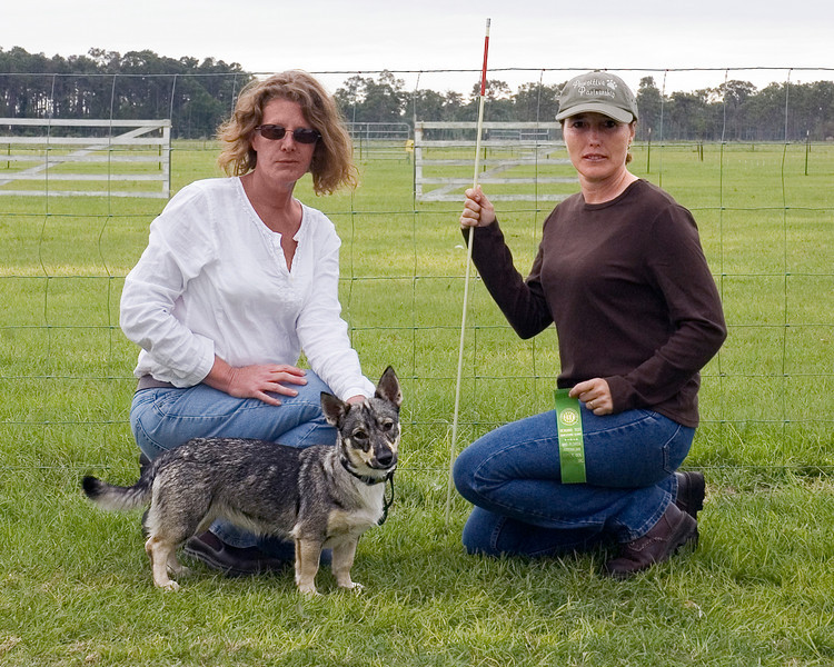 #203 Countten Tallysen, Swedish Vallhund, is shown here with her owner, Cindy Swain, and and handler, Norma Najorka.  Tally quaified for her PT title.