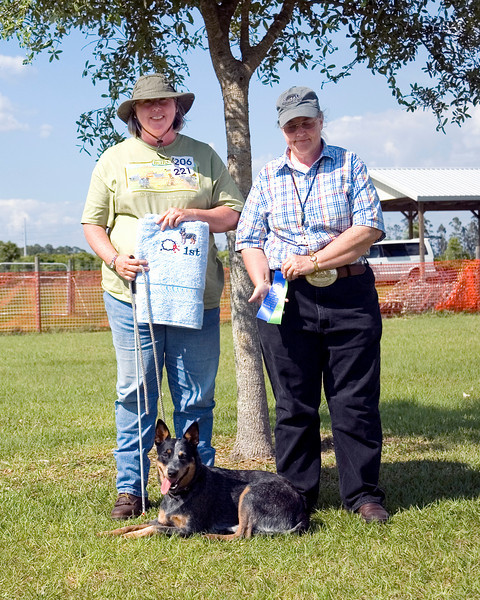 #221 Luaces Abby'Riginal, an Australian Cattle Dog, is shown with her owner Pamela Johnson and judge Sandra Limndenmugh.  Abby took 1st place in Started Course with sheep.