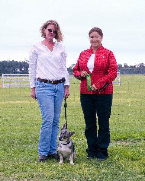 #203 Countten Tallysen, Swedish Vallhund, is shown here with her owner, Cindy Swain, and judge Leda Jones.  Tally is the first Vallhund to earn an AKC PT (Pre-trial tested).