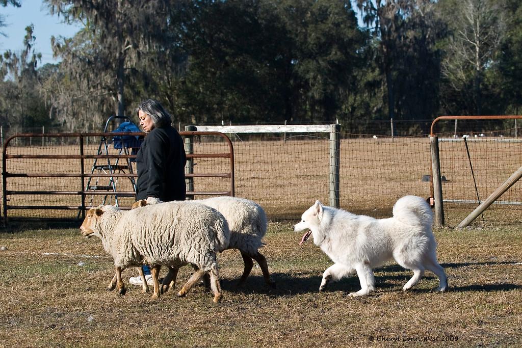 Robbie Avery works with one of her Sammy boys.