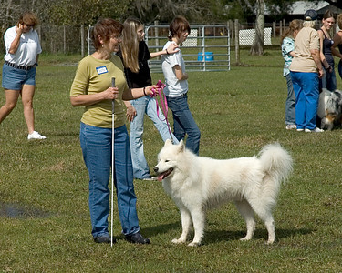 Wolf River's Fierce Heart, Samoyed, owned and loved by Diana Steele