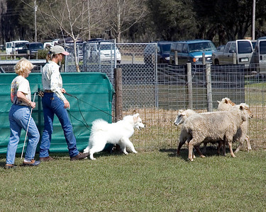Jackson shows that he has the force to keep the sheep off the gate.