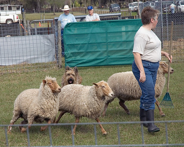 Bree moves the sheep behind Michelle who walks ahead of them.