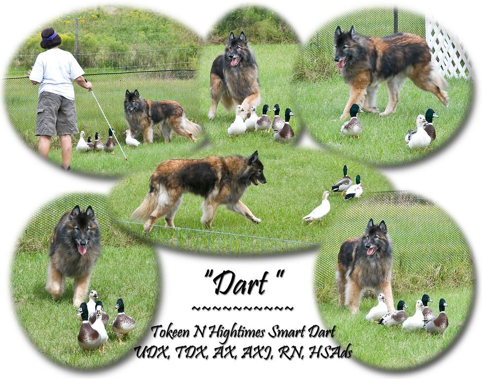 In Memory of Dart
