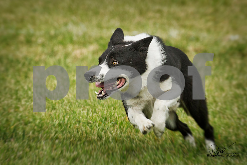 Crd_Concentration_1646