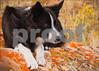 6603  Lichen It-Herding Series