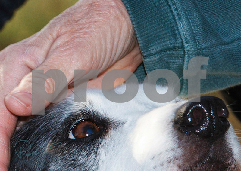 2201  Good Dog