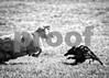 Crd_B&W_Showdown_0169_PAW