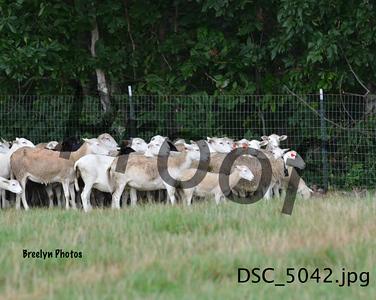 Herding8/19/17