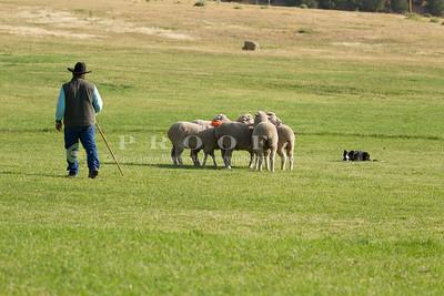 USA; Colorado; Meeker, Meeker Classic Sheepdog trials