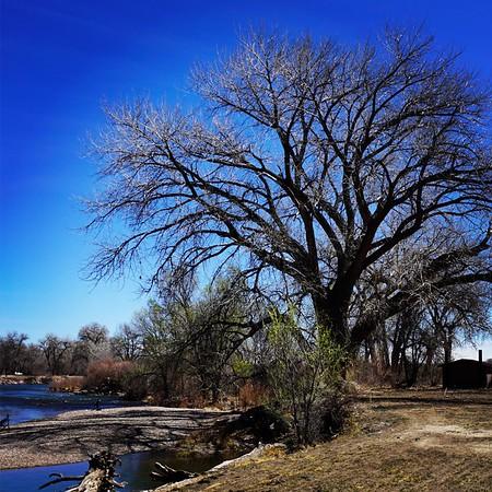 Trees! Artsy Filters! -- 03/30/17